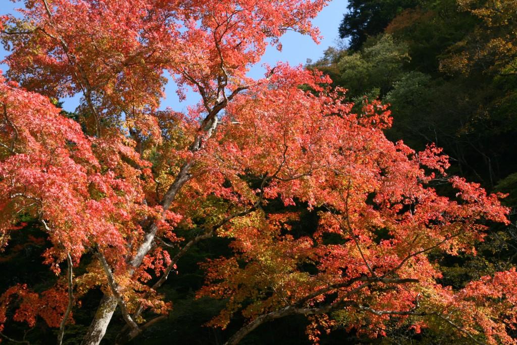 奥秩父大滝紅葉まつり